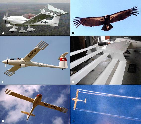 winggrid.jpg